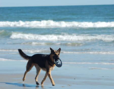 Myrtle Beach Pet Friendly