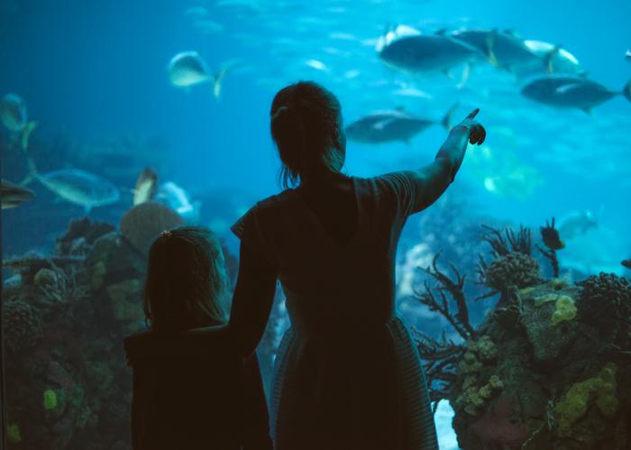 A mother and daughter admire the aquarium