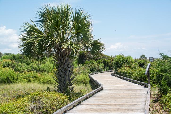 A boardwalk at Myrtle Beach State Park